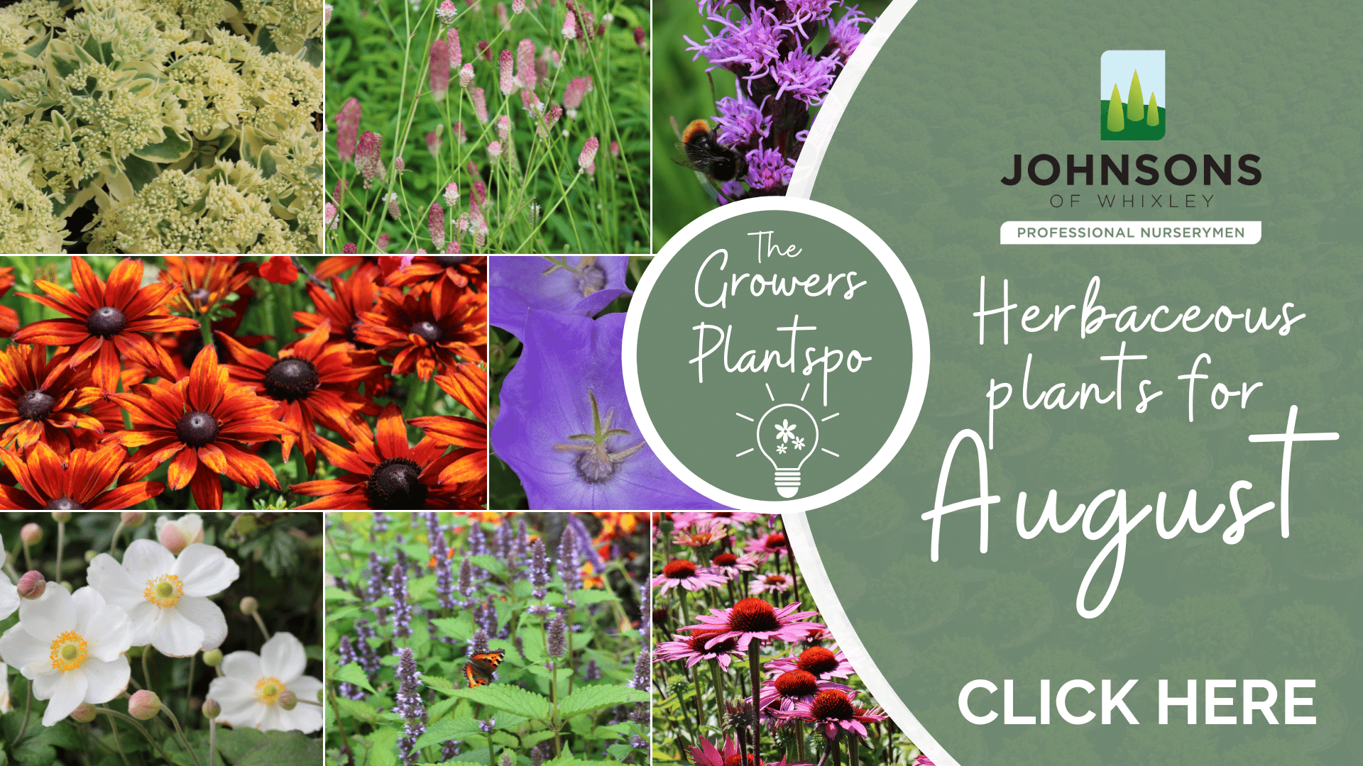The Growers Plantspo - August Herbaceous