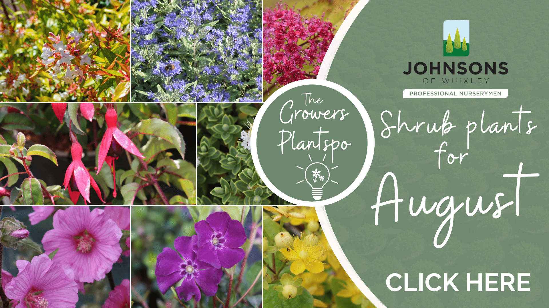 The Growers Plantspo - August Shrubs
