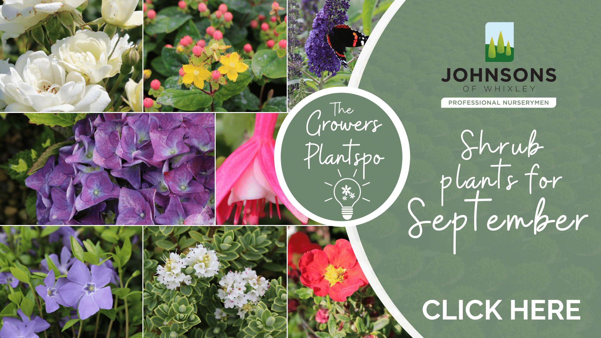 The Growers Plantspo - September Shrubs