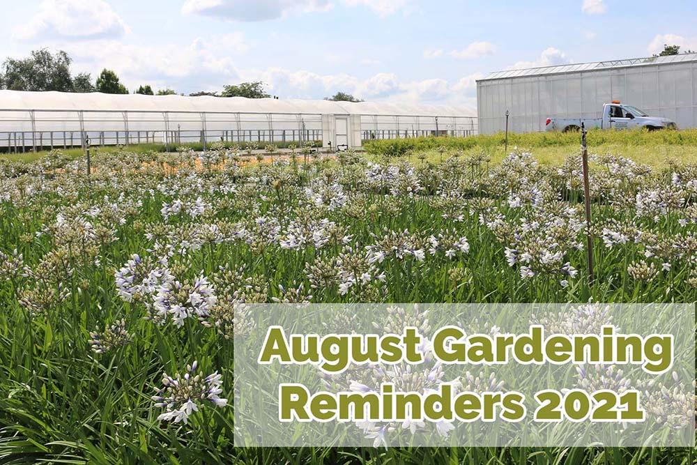 August Gardening Reminders 2021