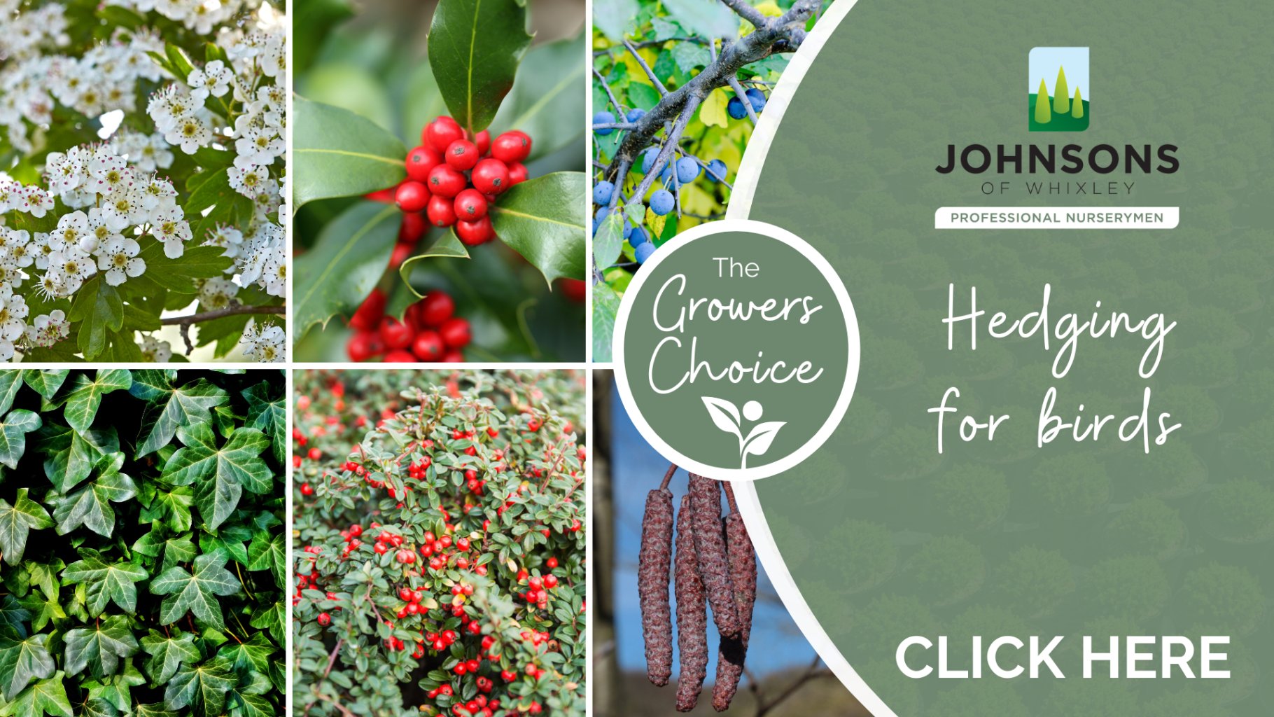 The Growers Choice: Hedging for birds