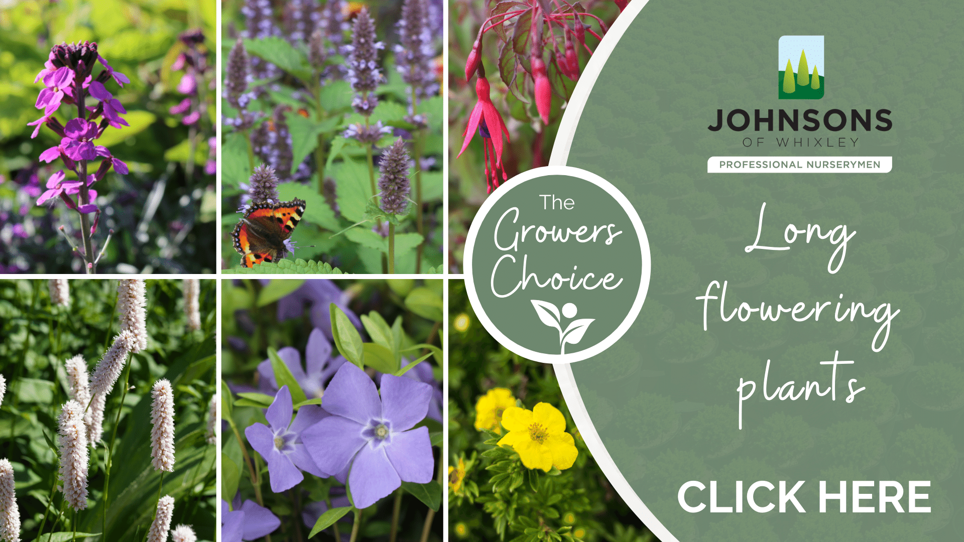 The Growers Choice: Long-flowering plants