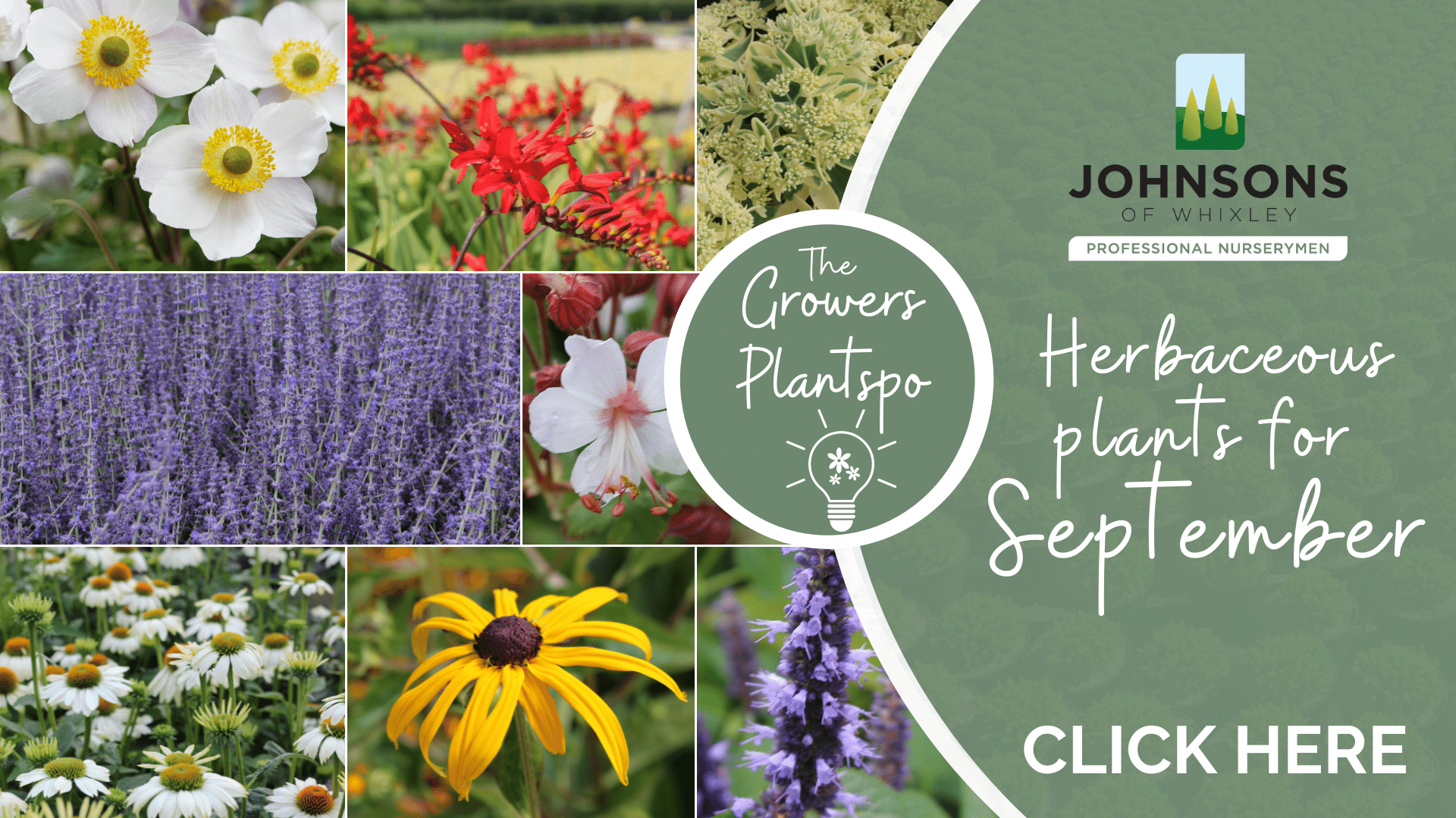 The Growers Plantspo - September Herbaceous