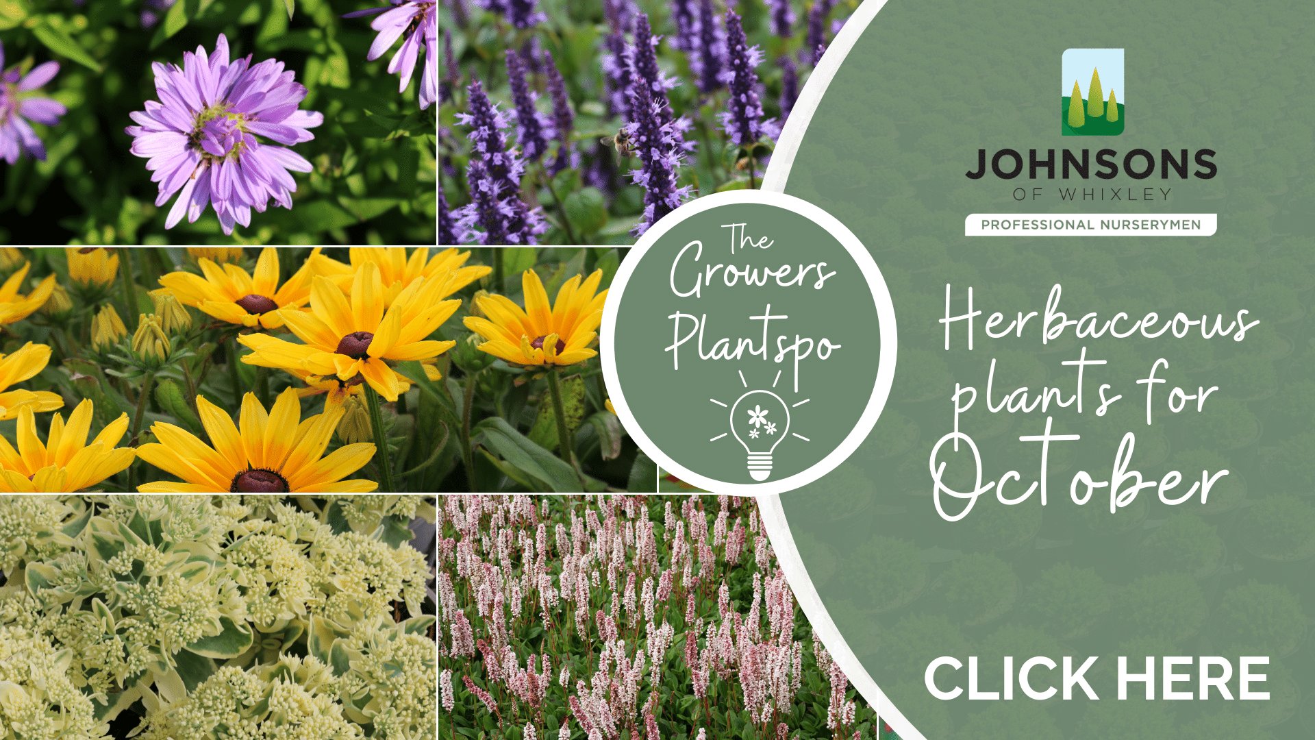 The Growers Plantspo - October Herbaceous