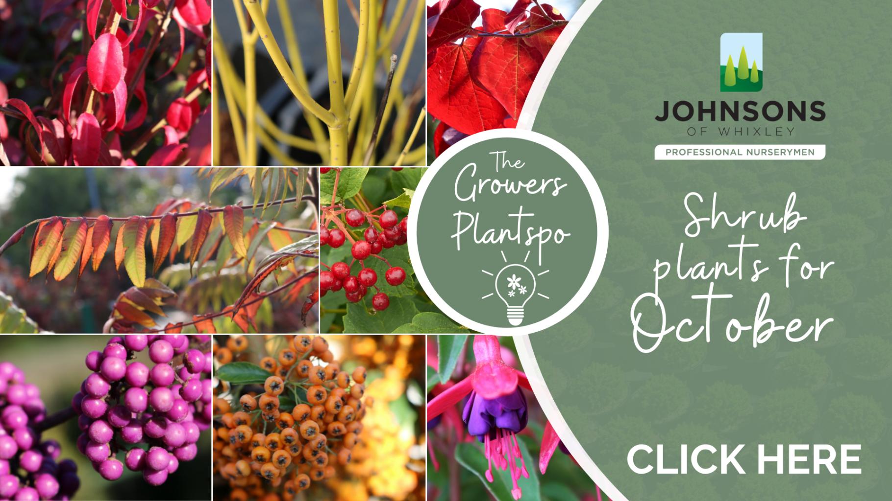 The Growers Plantspo - October Shrubs