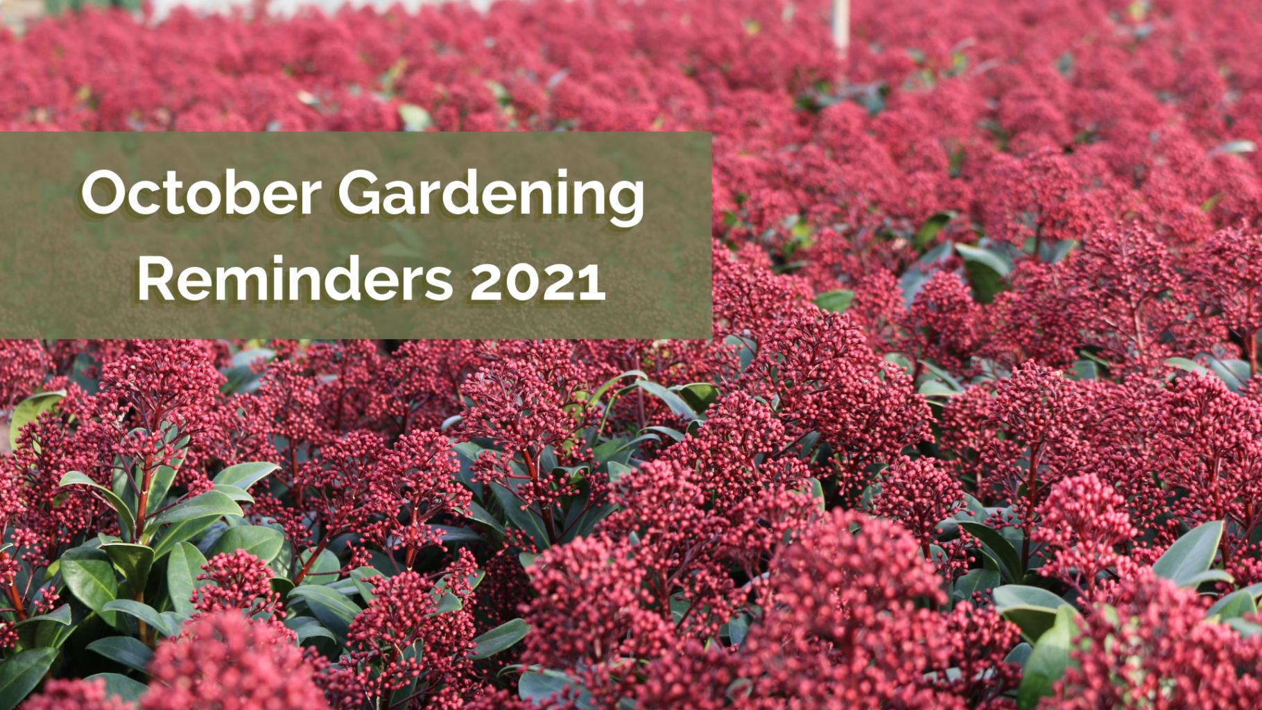 October Gardening Reminders 2021